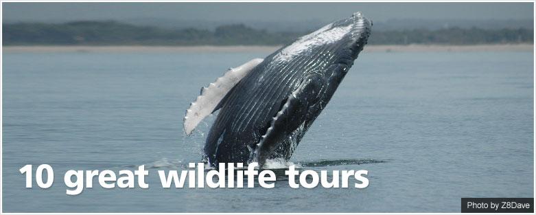 10 great wildlife tours