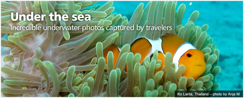 Under the sea -- Incredible underwater photos captured by travelers